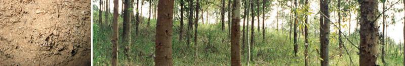 PHA Wood Pellets
